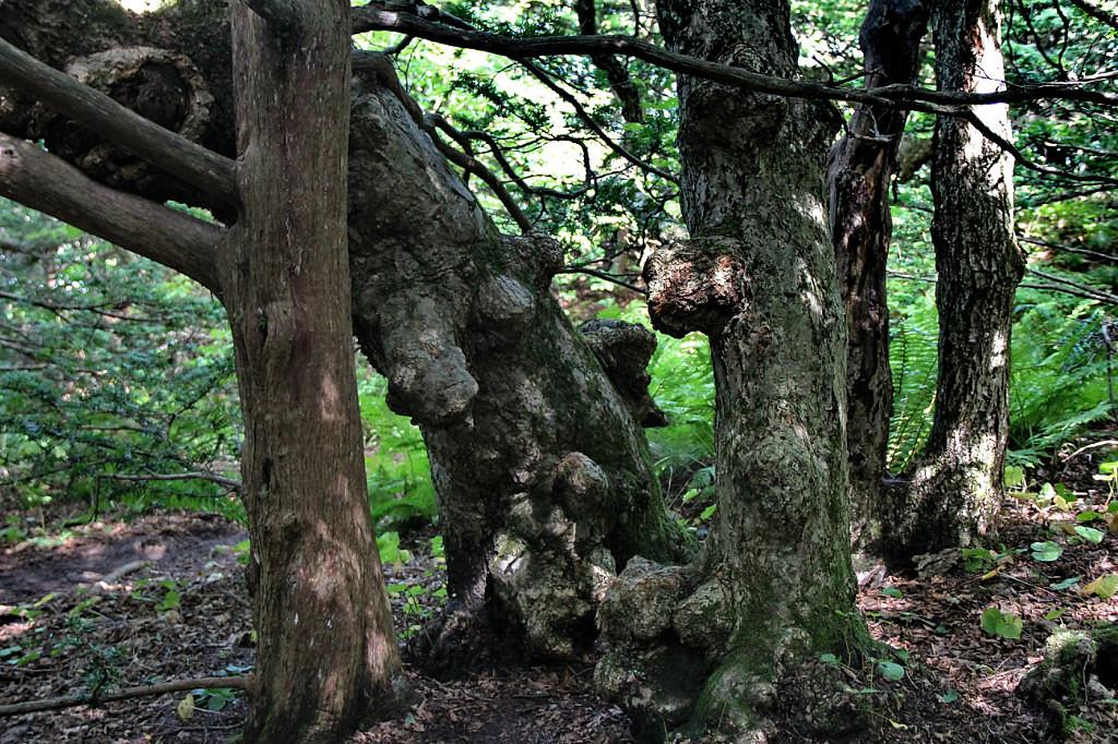 Деревья на острове Петрова
