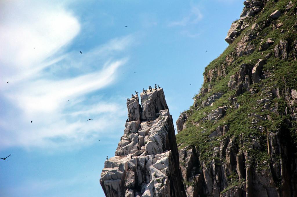 Бакланы на острове Петрова